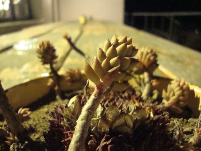 undead flower